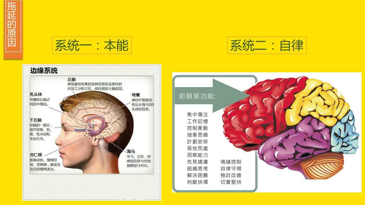大脑的两个系统